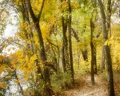 Landscape Photography, Nature Photograph, Autumn Art Print, Trail Photo, Fall Trees, Forest Pathway, Autumn Trees, Fall Foliage -  Woodlands