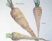 PRINT SALE 20% OFF Vintage Heirloom Vegetables Bookplate Illustration, Print for Framing, Parsnips, Parsnip Varieties, Kitchen Decor
