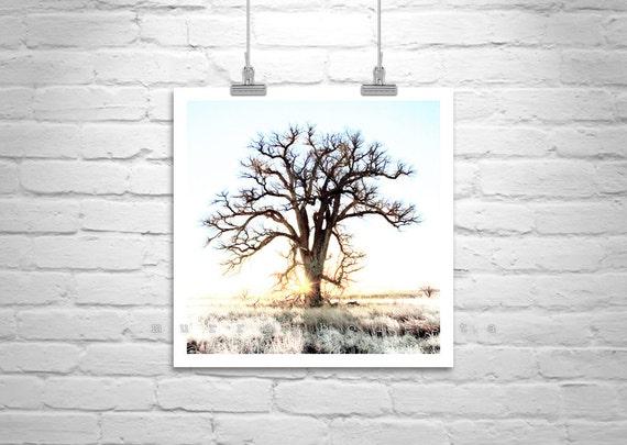 Cottonwood Tree Photograph, Fine Art Tree Picture, Tree Photographs, Winter Art, Nature Photography, Minimalist Art, Square Art, Photo Art