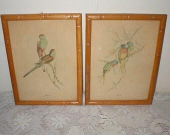 Bird Prints Pair J Gould Framed Parakeet Pictures  6X8 Antique Vintage