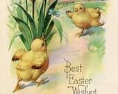 Easter Postcard, Vintage Postcard,Easter Greeting, chicks and tulips, Easter post card vintage postcard, SharonFosterVintage