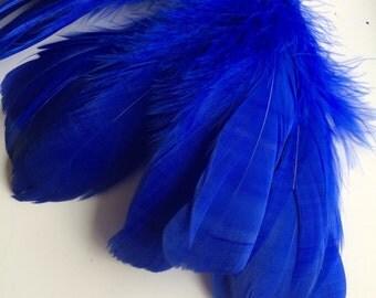 PRIMA GOOSE  / Cobalt, Electic Blue  / PR - 02 / On Sale