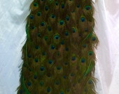 Partial Payment RESERVED Listing for a beautiful Attachable Peacock Feather Tail for 09/2016