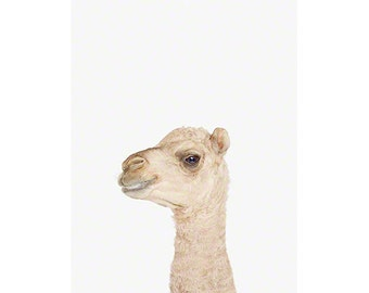 Baby AlpacCamel Little Darling. Baby Animal Prints. Baby Animal Wall Art. Baby Animal Nursery Art. Animal Nursery Decor. Baby Animal Photos.