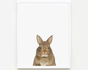 Baby Animal Nursery Art Print. Baby Bunny Little Darling. Farm Animal Wall Art. Animal Nursery Decor. Baby Animal Photo.