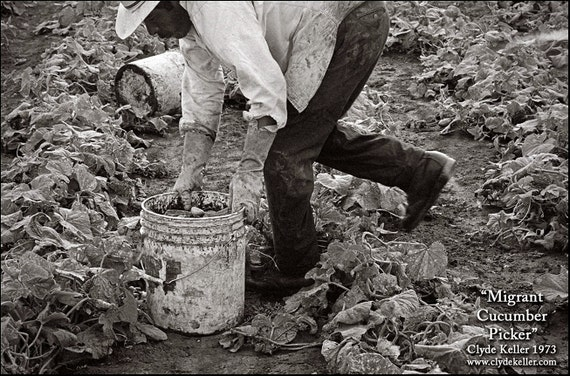MIGRANT CUCUMBER PICKER, Dykes Camp, Clyde Keller photo, 1973, Fine Art Print, Black and White, Signed
