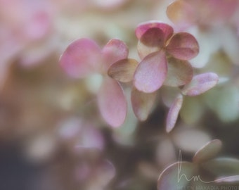 hydrangea photograph, pink and green flower petal tips, fairytale romantic nostalgic,  wall art, nursery and girl wall art, Lensbaby macro