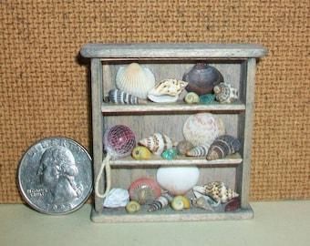 Miniature Sea Shell Shelf  1:12 scale