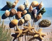 21 Seashell Starfish Stems - 21 Naturally Colorful Seashells and Starfish for Wedding Bouquets or Centerpieces