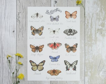 Butterfly print - watercolour butterflies I.D. chart - natural history illustration - watercolor print - butterfly nursery art