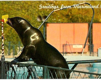 Vintage California Postcard - Greetings from Marineland of the Pacific (Unused)