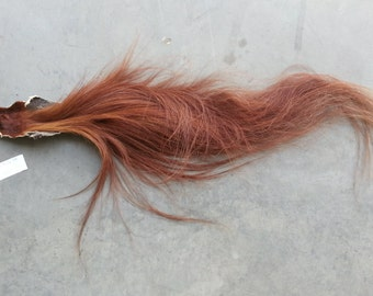 Sorrel Horse Tail- Soft Tanned -Lot 160826-AA