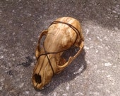Antiqued Skull Barrette -- burning man wasteland weekend tribal fusion belly dance amazon larp barbarian apocalyptic