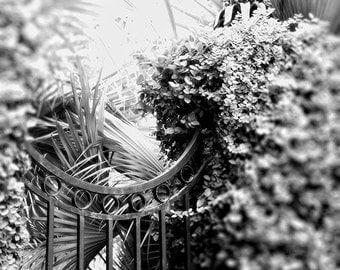Black and White Photography, Landscape Print, Savannah Georgia Wall Art, Garden Photo, Travel Photography, Home Decor, Southern Art
