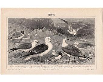 1894 SEAGULLS ANTIQUE LITHOGRAPH - original antique print - shore bird ocean beach - seagull print