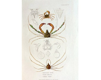 1787 CRAB ENGRAVING original antique french crustacean ocean fauna sea life print
