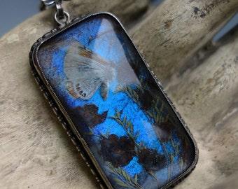 Morpho Butterfly Sterling Pendant Necklace Thomas Mott