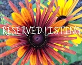 Custom Item - Reserved for Suzanne