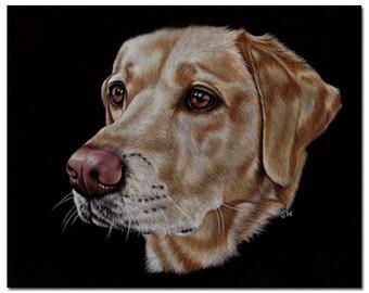 "8""x10"" COMMISSION PET Custom animal PORTRAIT Sandrine Curtiss Original Art animal colored pencil painting Gift dog cat wildlife"
