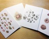 Botanical Art Cards, Series 09 - Nuts