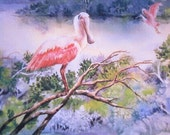 Spoonbill on a Limb ACEO watercolor print 767 watercolorsNmore pink Florida shorebirds