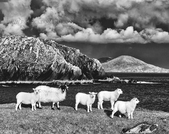Horse Island, Kerry, Ireland photography