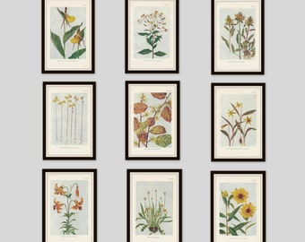 Any 4 Botanical Prints, Set of 4, Antique Botanical, Botanical Print Set, Set of Prints, Cottage Decor, Victorian, Lithograph, Wildflower