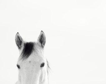 Minimalist Animal Photograph, White Horse on White Backdrop, Black and White
