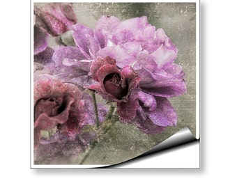 Wall Mural Art Decal Dusty Pink Rose