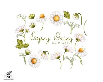 Daisy clip art - Watercolour flower clipart - Watercolour daisies - Flower illustration - Commercial use clip art - Botanical print -