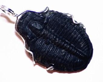 Trilobite Fossil Pendant in Sterling