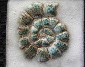 Ceramic STAMPED AMMONITE Shell Fossil TILE - any two colors