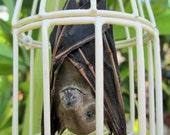 My Pet Bat in Beige Metal Cage - SHIP FREE 1