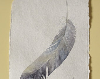 Feather original watercolour painting illustration picture