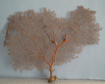 "14.6"" x 11"" Natural Red Color Sea Fan Seashells Reef Coral"