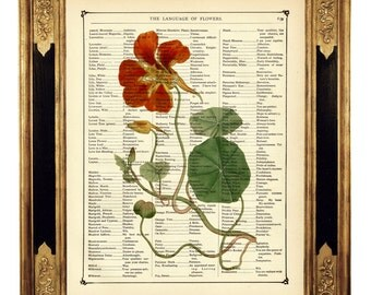 Red Flowers Botany - Vintage Victorian Book Page Art Print Steampunk