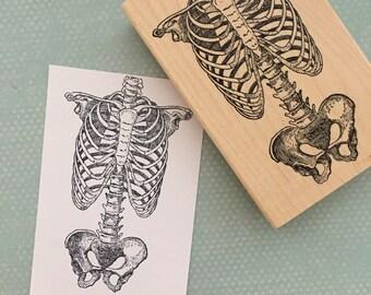 Skeleton Torso Wood Mounted Rubber Stamp 5797