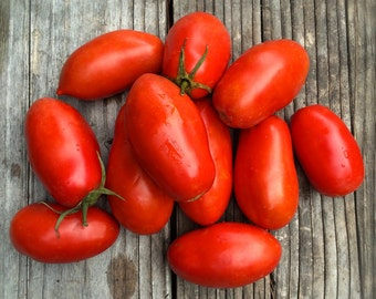 CLEARANCE SALE! Roma Paste Tomato Italian Heirloom Seeds Organically Grown Excellent Fresh or Cooked Canned Determinate Variety