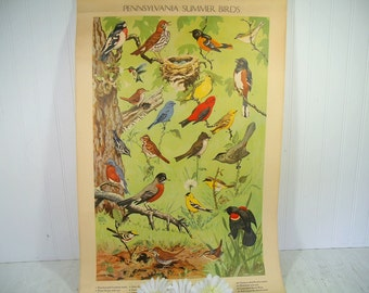 Summer Birds Litho Antique Pennsylvania Poster by Jacob Bates Abbott 1946 - Fourth in Series Distributed by the Pennsylvania Game Commission