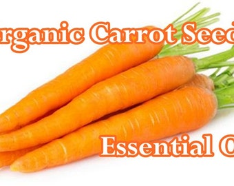 4 oz. ORGANIC CARROT SEED Essential Oil: Imported direct from distiller! Aromatherapy - Therapeutic Use - Organic