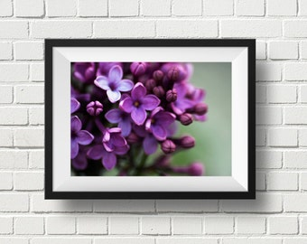 Lilacs flower art print, fine art floral photography, bedroom wall decor, purple home decor, botanical print, nursery decor, gifts under 25