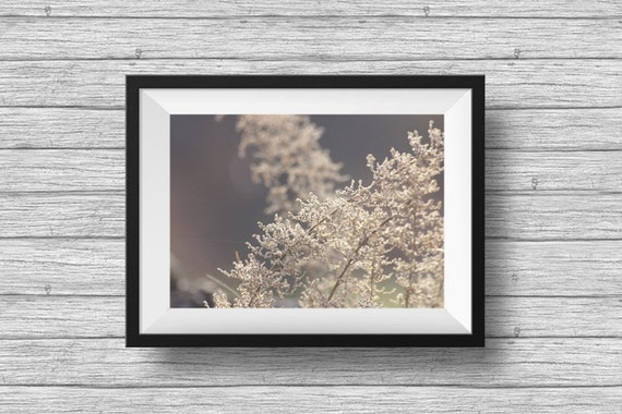 Golden, nature photography, dreamy, romantic photo, ethereal botanical print, wall art decor