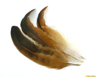 10 Pieces Brown Feather 18-30cm (YM67)