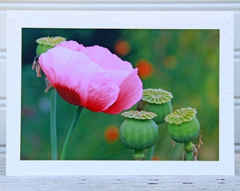Pink Poppy Photo Greeting Card, Poppy and Seed Pods, Fine Art Photography, Nature Garden Photo Print, Wild Flowers, Any Occasion Card