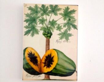 Tropical Papaya Vintage Wall Tile
