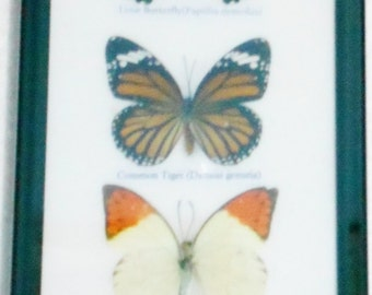 REAL 5 BEAUTIFUL BUTTERFLY Wall Decor Collection frame /BA05jjj