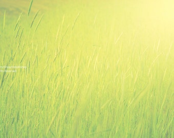 Green Grass In Yellow Sunshine -Home Decor Wall Art -Fine Art Nature Photo Print On Metallic Paper -Abstract In Vibrant Color