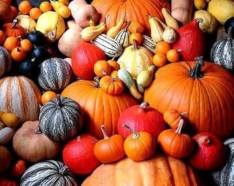 Pumpkin Rainbow Collection, 50 seeds, 5 exotic heirlooms, Blue Jarrahdale, African White, Brazilian Moranga, Rouge d'Etampes, gardener gift