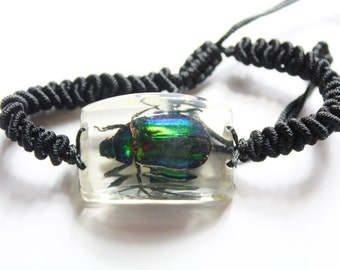 Real Insect Rhomborrhina Splendida Green Flower Beetle Bracelet