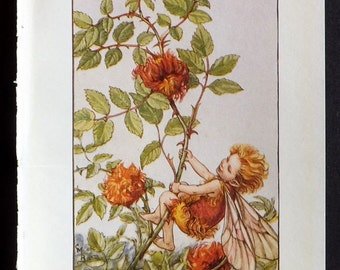 Cicely Mary Barker C1940 Vintage Flower Fairy Print. The Robins Pincushion Fairy